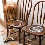 ظرف غذا سگ