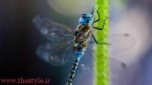 تصویری از یک حشره که توسط لنز ماکرو عکاسی شده است. عکس: محمد خیرخواه