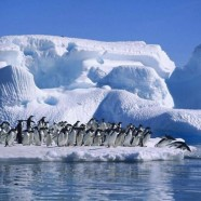 علاقه روزافزون گردشگران برای سفر به قطب شمال