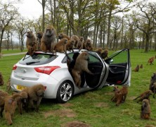 تست میمون: جدیدترین آزمون هیوندای