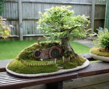 باغچه کوچک